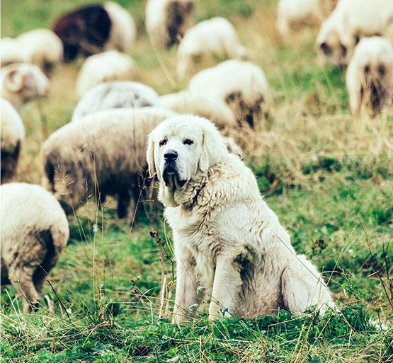 https://karczmagoraleczka.pl/wp-content/uploads/2020/07/dogs.jpg